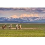 Abenteuer Mongolei (15 Tage: Juli - August 2017)